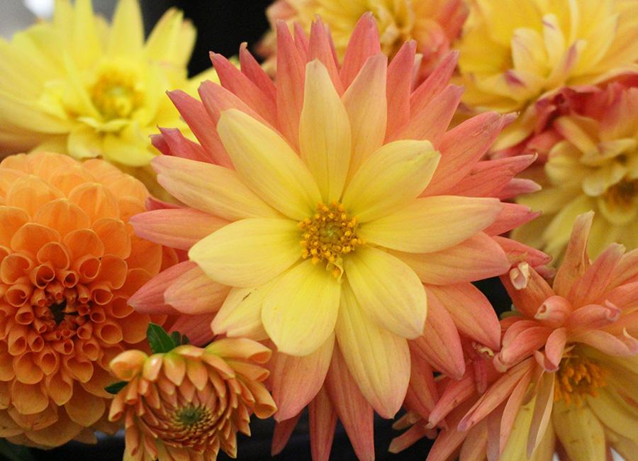 Keiths-Flower-Bouquet